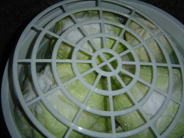 Kiseljenje kupusa